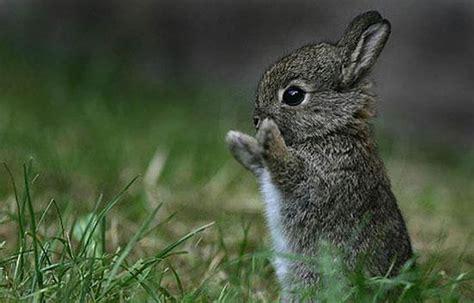 imagenes de animales pequeños peque 241 os animales 70 fotos taringa