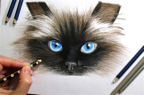 How To Draw A 3d Room art of cat drawing pencil 3d how to draw a 3d cat cat