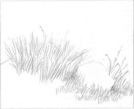 Sketches Grassy Land grass sketch plants grasses landscape