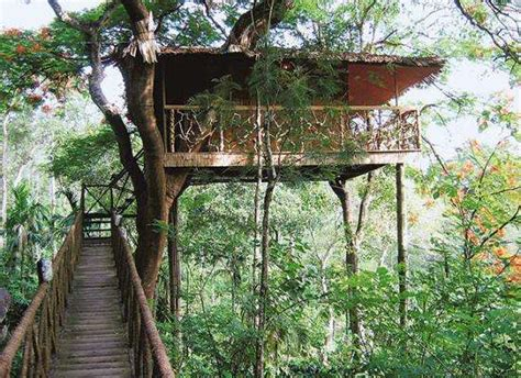 tree house hotels where your room meets the sky