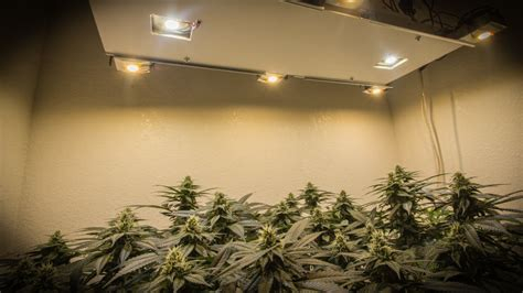 10 DIY Led Grow Lights For Growing Plants Indoors ? Home