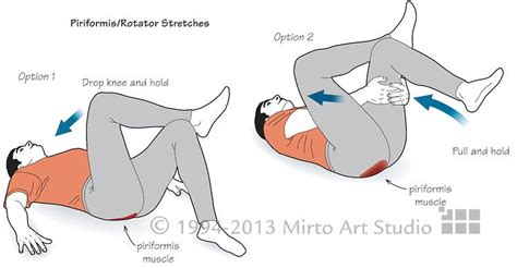 piriformis diagram vector illustration showing the sequence of the piriformis