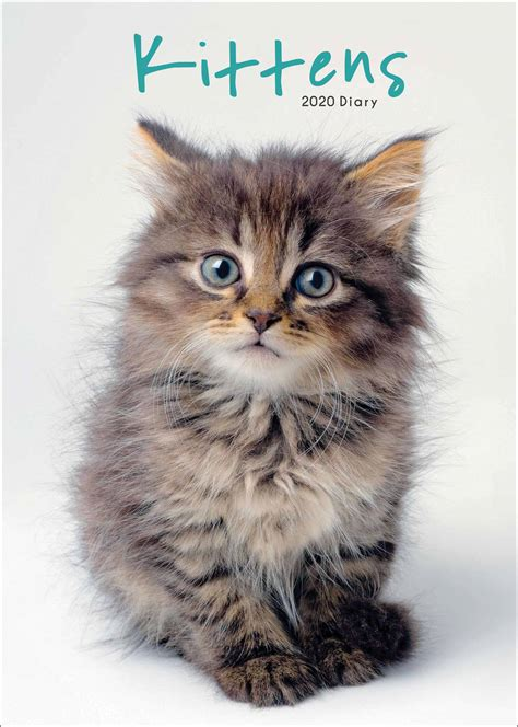 kittens  diary  calendar club uk
