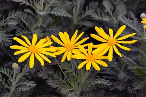 lista nomi fiori fiori gialli nomi elenco gpsreviewspot