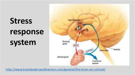 ode to the brain positiveneuro the brain