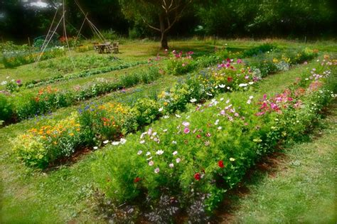 How To Design A Flower Garden Layout Top Annual Flowers For Cutting Higgledy Garden