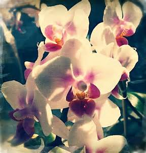 orchid colors orchid white color a day 56 color