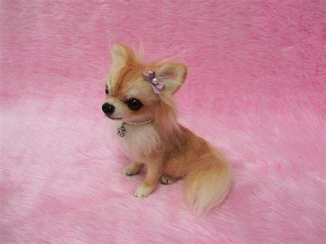 cuts for chihuahua papillon mix long hair chihuahua haircuts hairstylegalleries com
