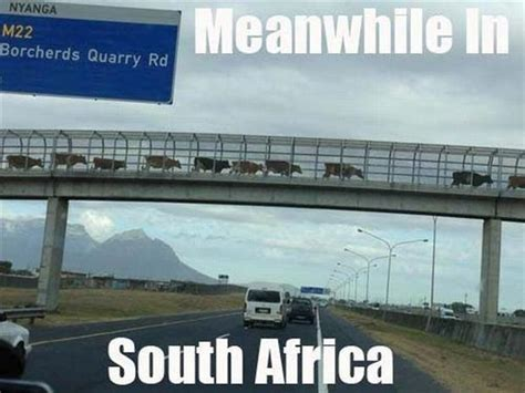 South African Memes - five hilarious memes about south africa to make your day