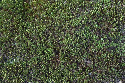grow moss a natural groundcover for shady places