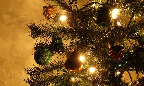 choosing caring for fresh cut christmas trees metro parent