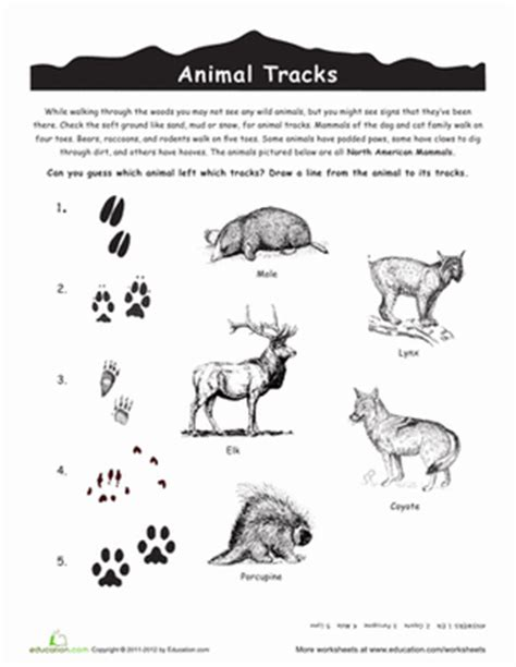 the charts the lives and lessons of american child prodigies books american animal tracks worksheets animal and
