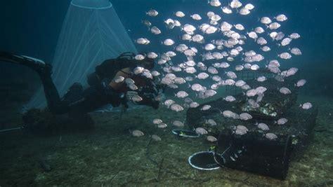 imagenes de la vida marina guarder 237 as de peces para salvar la vida marina cerca de