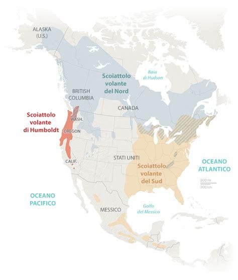 lo scoiattolo volante un nuovo scoiattolo volante national geographic