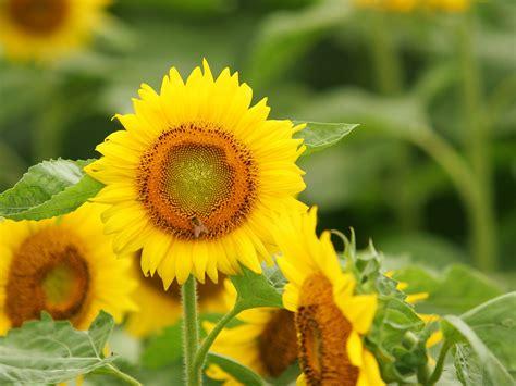 imagenes sorprendentes de flores banco de im 193 genes las mejores im 225 genes de flores en el