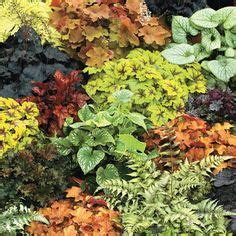 what to plant on west side of house 1000 images about gardening on pinterest perennial gardens perennials and plants