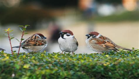 world sparrow day ten interesting facts about our