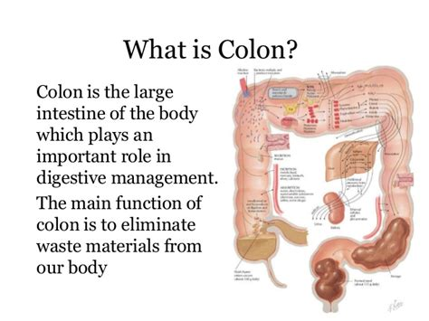 Purpose Of Detox by Colon Cleanse