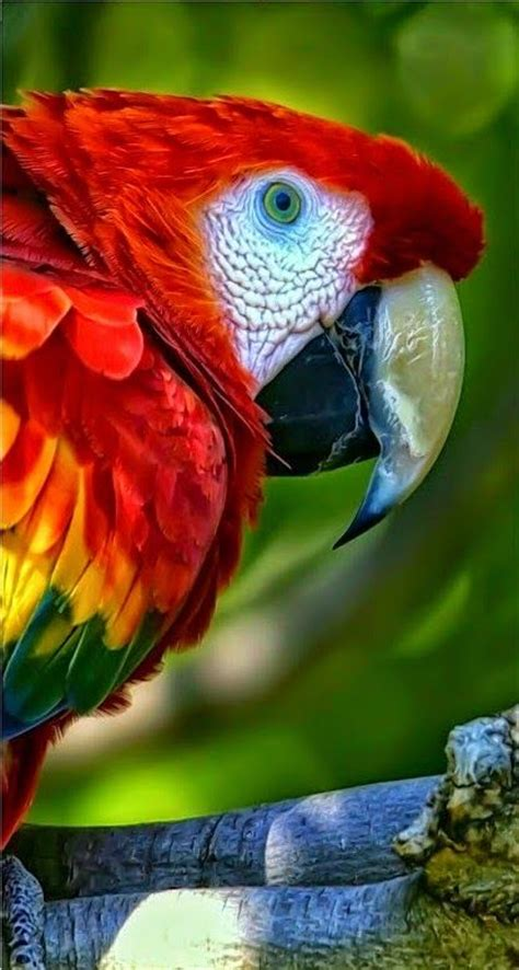 big colorful bird 25 best ideas about tropical birds on pretty