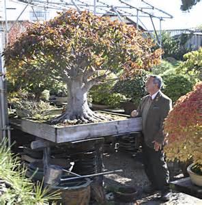 autumn 2013 japan bonsai exploration tour valavanis