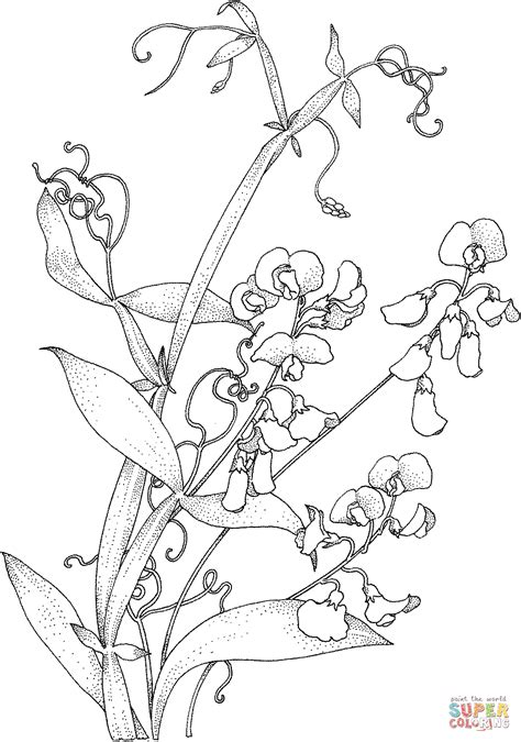 printable coloring pages hearts with vines sweet pea vine coloring page free printable coloring pages