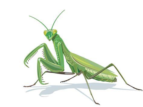 praying mantis drawing gallery halloween costume