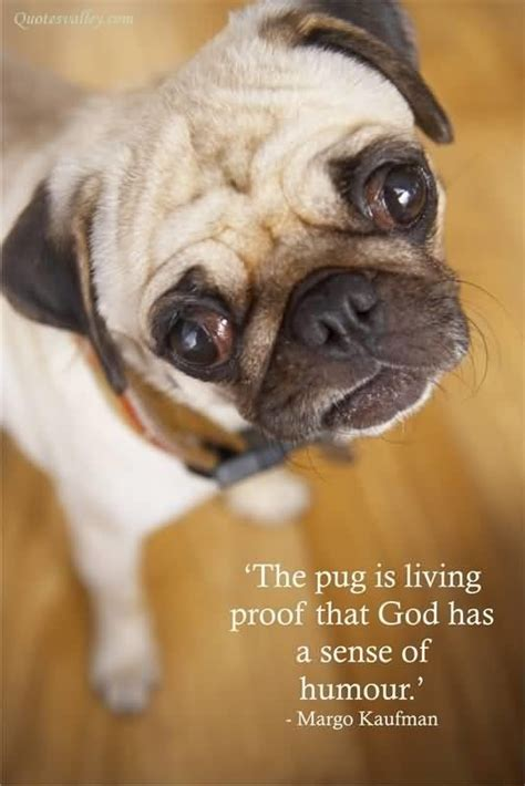 living with a pug the pug is living proof that god has a sense of humour quote collection of inspiring