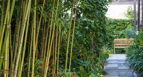 10 different types of bamboo diy gardening craft recipes renovating better homes and