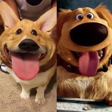 snapchat filter transforms  dog  dug