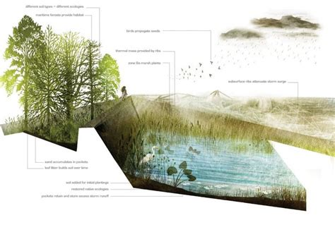 Landscape Architecture Perspective Rendered Section Landscape Architecture Search