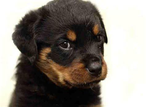 imagenes originales de animales nombres para perros machos listado de nombres para
