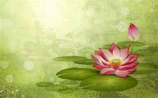 Lotus Flower Wallpaper Lotus Flower Wallpapers Wallpaper Cave