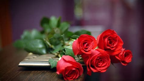 hd wallpapers for laptop rose cool pictures rose flower hd wallpaper of flower