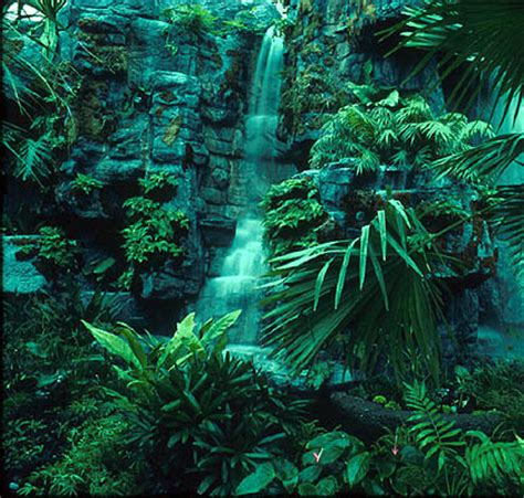 plant in tropical rainforest world visits tropical rainforests green plants on the earth