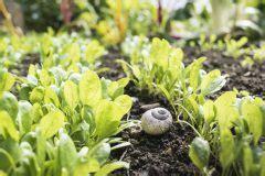 Schnecken Im Hochbeet Was Tun by Hochbeet Bepflanzen Im August 187 Diese Pflanzen Kommen Infrage