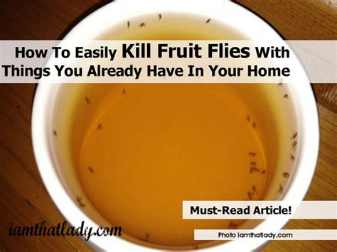How To Kill Fruit Flies In House 28 Images How To Get Rid Of Fruit Flies Dengarden