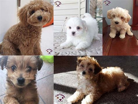 most adorable puppies puppies gallery free pictures and wallpapers