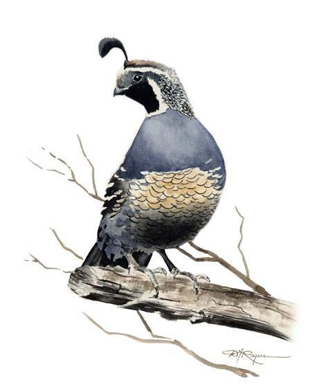 california quail print signed by artist dj by k9artgallery