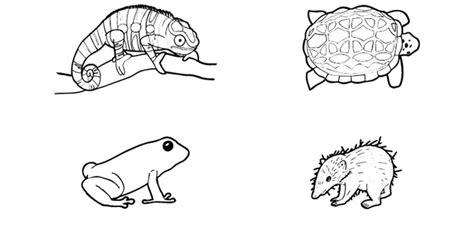 cadena alimenticia en ingles para niños dibujo de animales para imprimir excellent dibujos