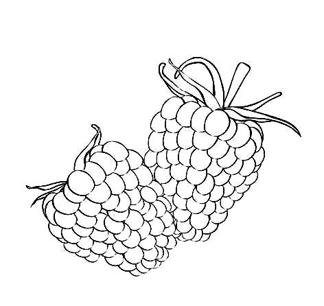 free raspberry coloring pages pictures learn to coloring