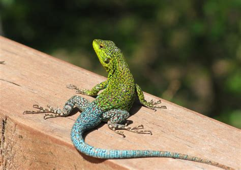 Lu Reptil free stock photos rgbstock free stock images