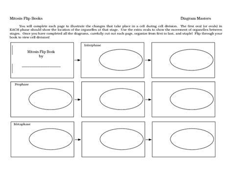 printable worksheets cell division meiosis worksheet pdf calleveryonedaveday