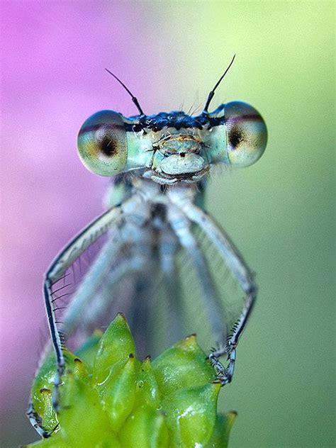Tas Papillon 293 les 293 meilleures images du tableau animaux t as d beaux yeux tu sais sur