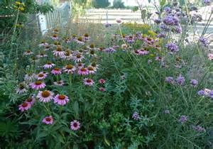 late blooming perennials showy late summer blooming perennial flowers portland monthly