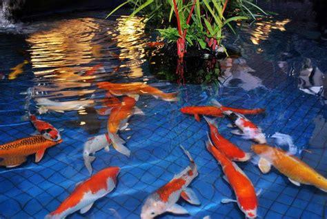model kolam ikan hias koi minimalis terbaru