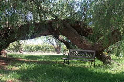 Peppermint Farm Cottage by Vineyard Just At The Back Picture Of Peppermint Farm Cottage Mclaren Vale Tripadvisor