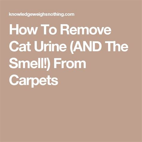 how to get cat smell out of rug best way to get cat urine odor out of carpet carpet vidalondon