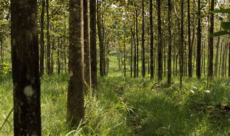 www conafor gob mx list de beneficiarios 2016 plantaciones forestales comerciales comisi 243 n nacional
