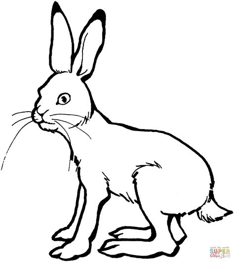 coloring pages jack rabbit hare 3 coloring page supercoloring com