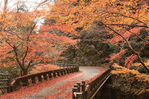 imagenes de otoño en japon festivales paisajes y gastronom 237 a para disfrutar del